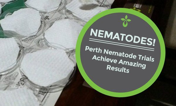 Nematodes – The Natural Millipede Defence