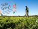 Hello Spring! What weeds has winter left behind in your lawns & garden?
