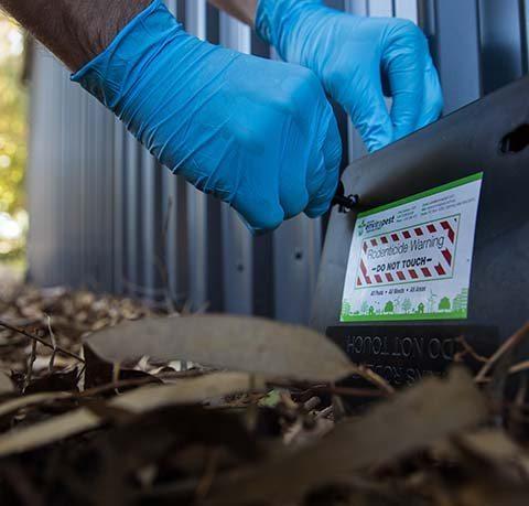 Business Pest Control   Envirapest
