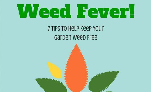 7 Tips to Help Keep Your Garden Weed Free