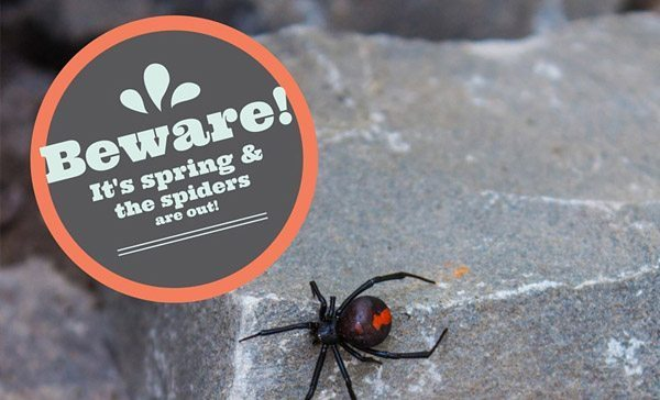 Beware – The Spiders Are Out!