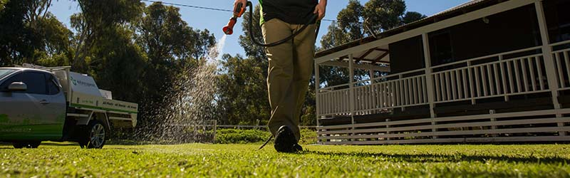 Lawn Treatments | Perth | Envirapest