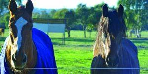 Paddock Spraying | Horses | Envirapest