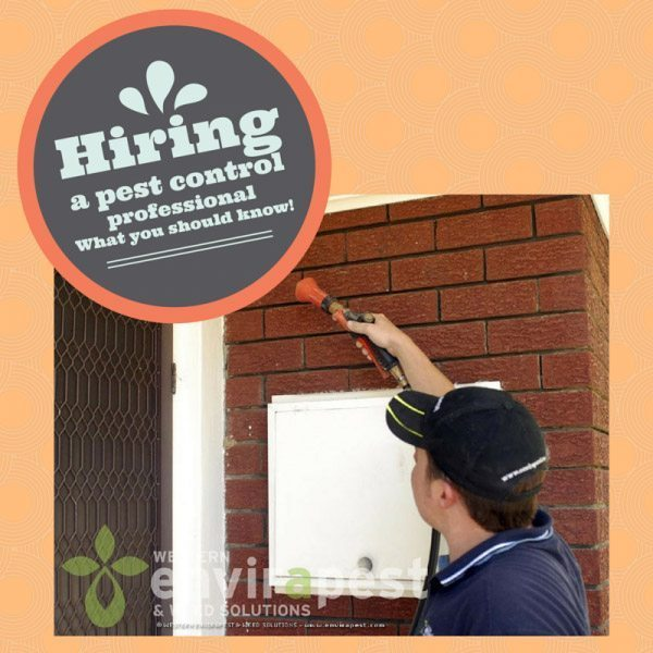 Top 10 things to consider when hiring a pest control professional in Perth