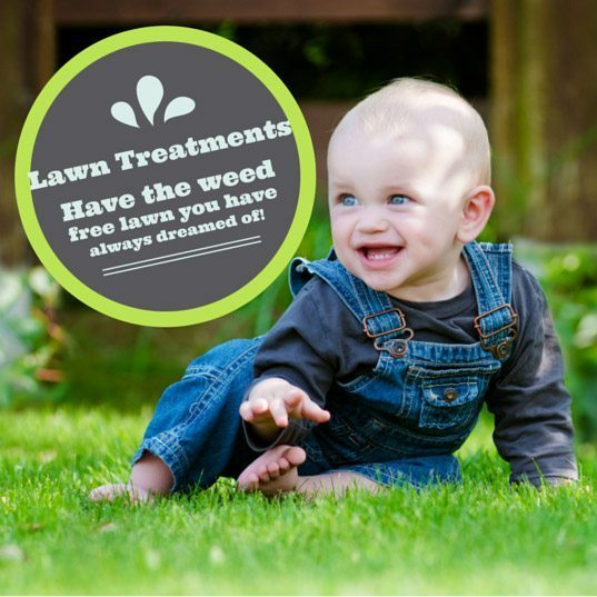 Effective lawn treatments for weeds in Perth