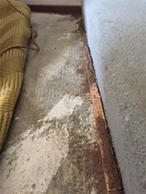 Active termite damage along the carpet edge in the lounge room.