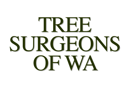 Tree Surgeons of WA are a business associate of ours and help with us with Pest Management