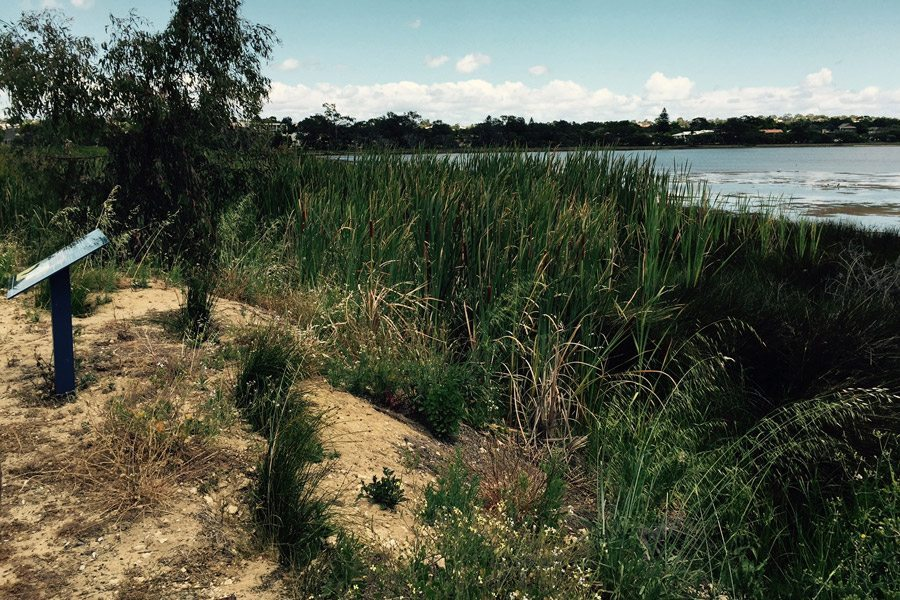 Attadale Foreshore before Envirapest initiated a Weed Management Plan