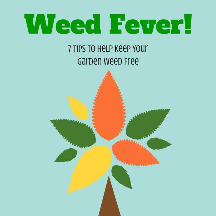 Weed Fever is 7 tips to help keep your garden in Perth weed free