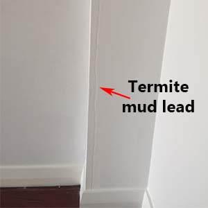 Termite Mud Lead | Envirapest