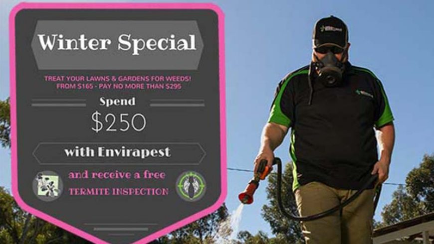 Spend $250 & Receive A Free Termite Inspection!