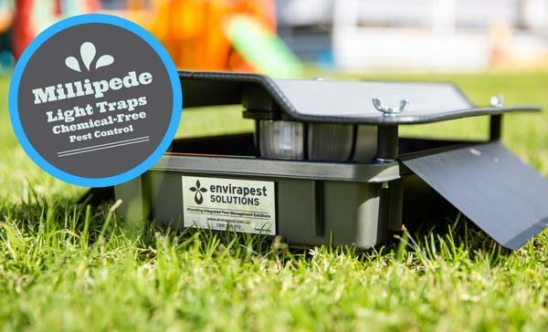 Millipede Traps! True 'Chemical Free' Pest Control