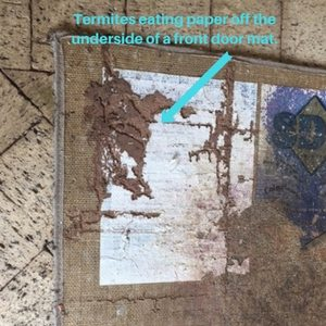 Termite Treatment Price | White Ants | Envirapest