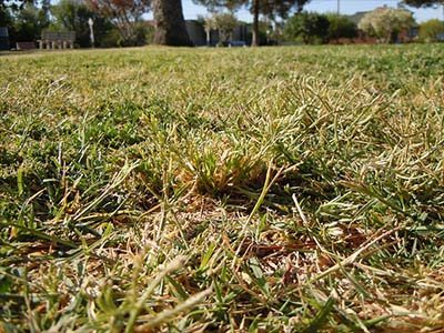 Get rid of lawn weeds | Envirapest