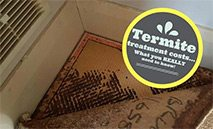 Termite Treatment Cost – What you REALLY need to know!