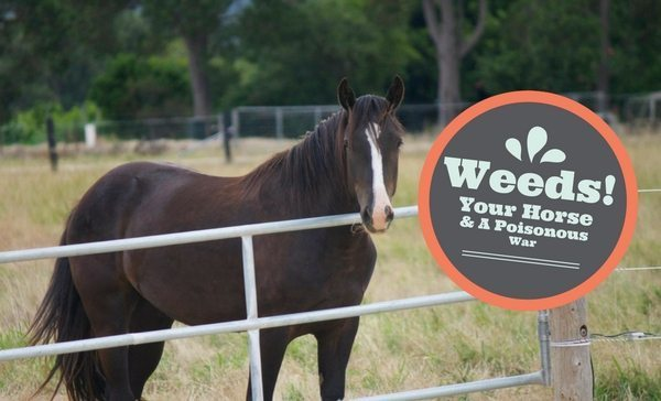 Weeds! Your Horse & A Poisonous War.