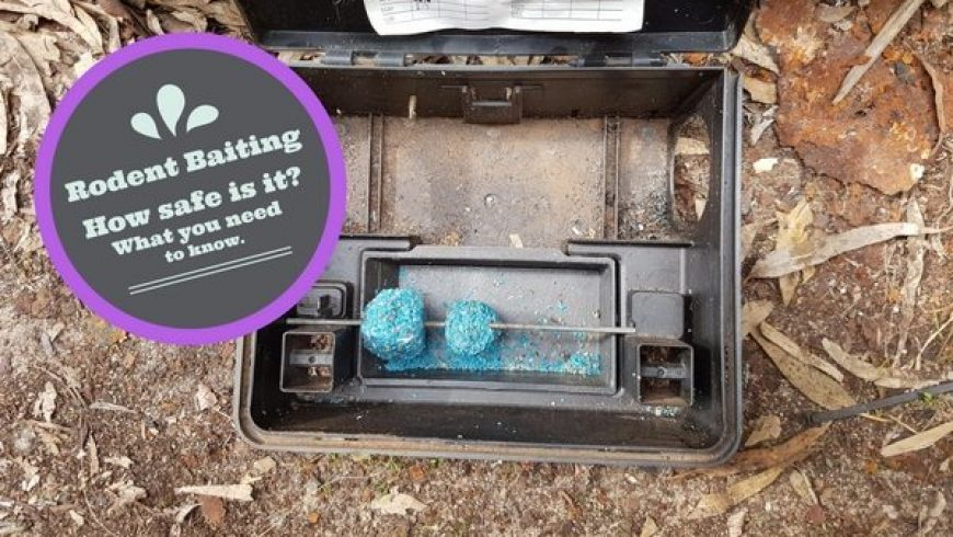 How Safe Is Rodent Bait? What You Need To Know