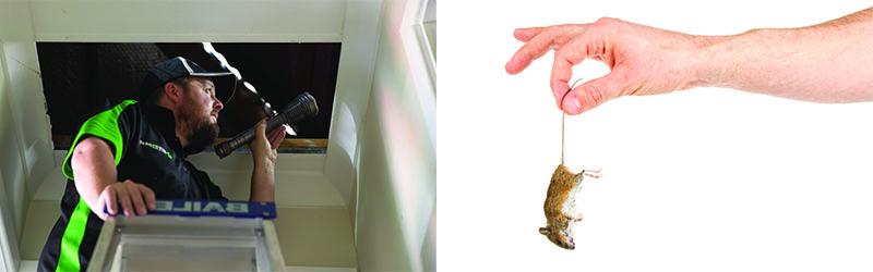 Rodent Removal | Dead Rat | Dead Mouse | Envirapest