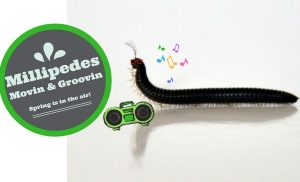 Millipedes | Perth Millipedes | Millipede Light Traps | Nematodes | Portuguese Millipedes | Envirapest