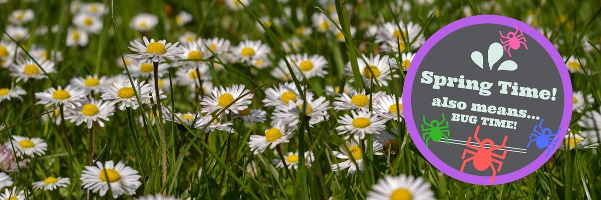 Spring | Spring Bugs | Envirapest